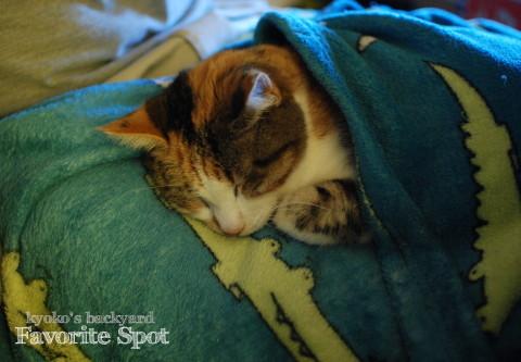 肌寒い夜の、姉妹猫のお気に入りスポット_b0253205_02280214.jpg