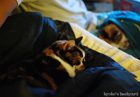 肌寒い夜の、姉妹猫のお気に入りスポット_b0253205_02284414.jpg