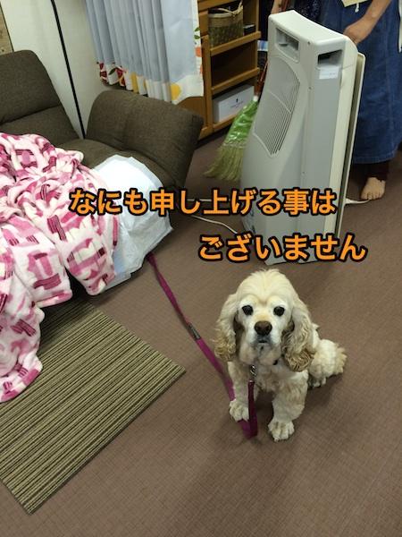 b0067012_15343772.jpg