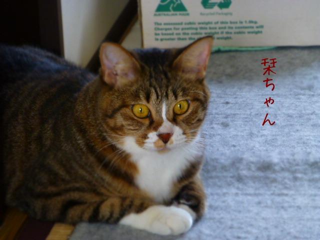 お留守番 にゃんこ ギャラリー 【September】_e0237625_1834070.jpg