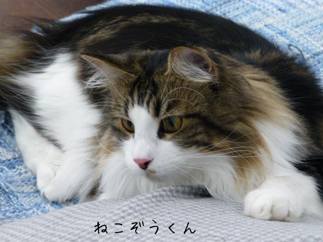 お留守番 にゃんこ ギャラリー 【September】_e0237625_19215836.jpg
