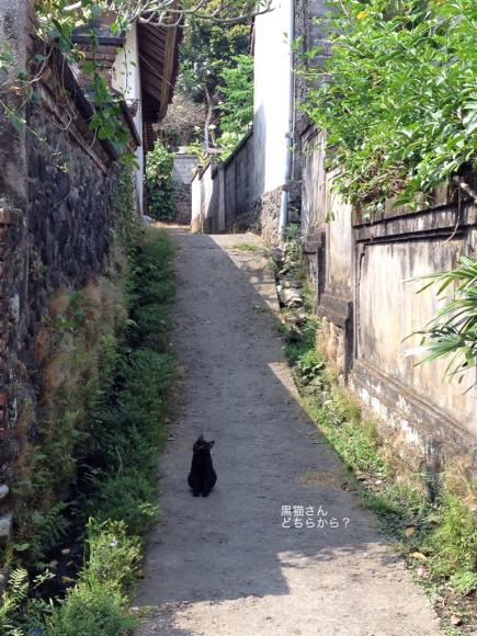 道で出会った黒猫さん_a0120328_16410386.jpg
