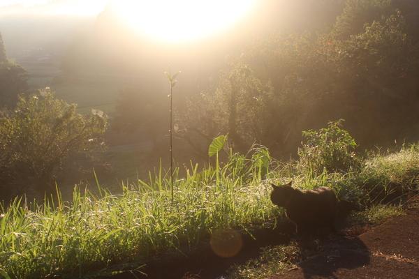 愛猫キラ☆朝の光に包まれて☆_a0174458_2352111.jpg