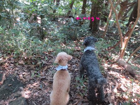 鷹取山を歩いて来ました〜_a0109467_0365493.jpg