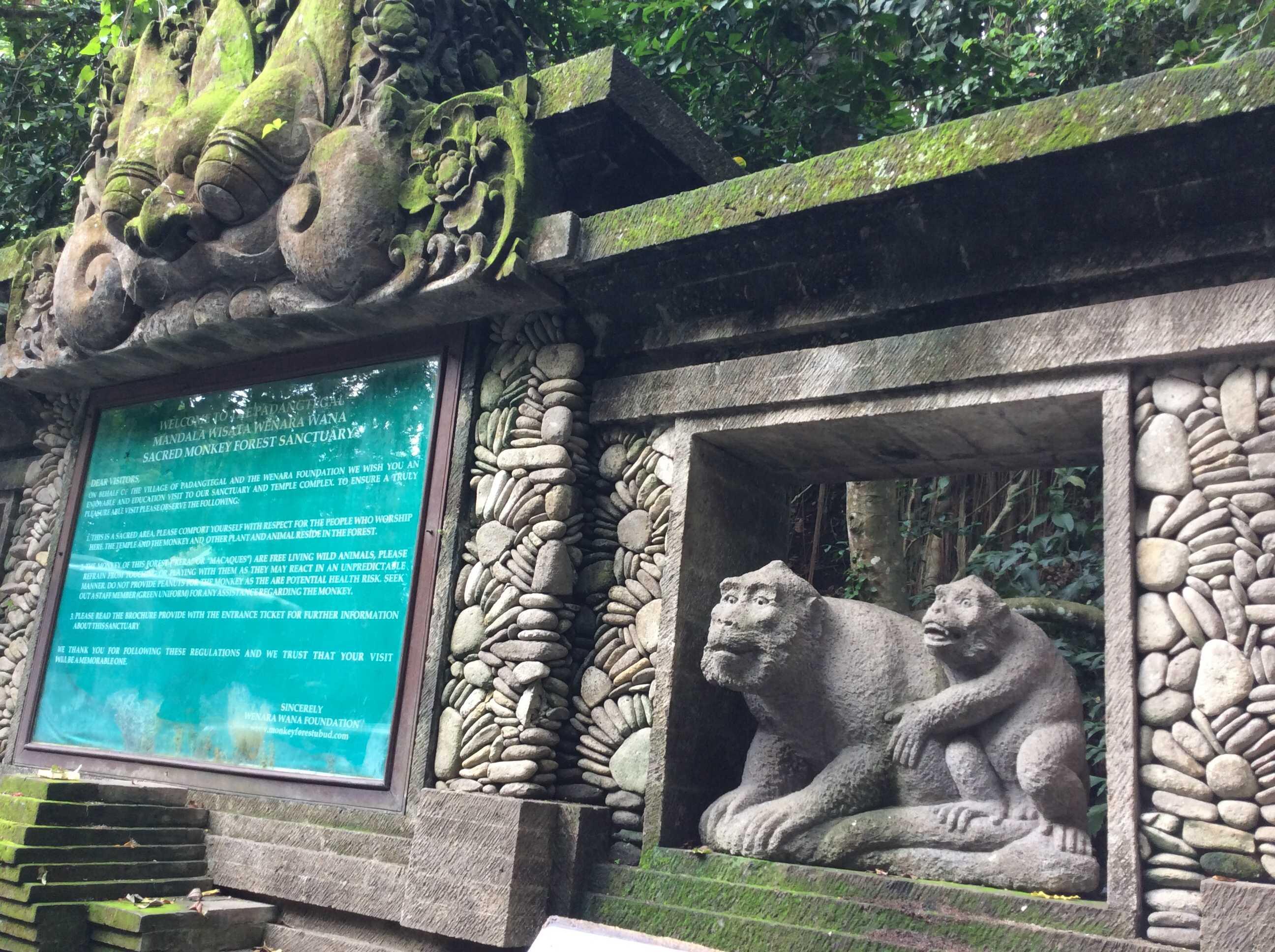 猿の泥棒さん☆_d0339884_17451965.jpg