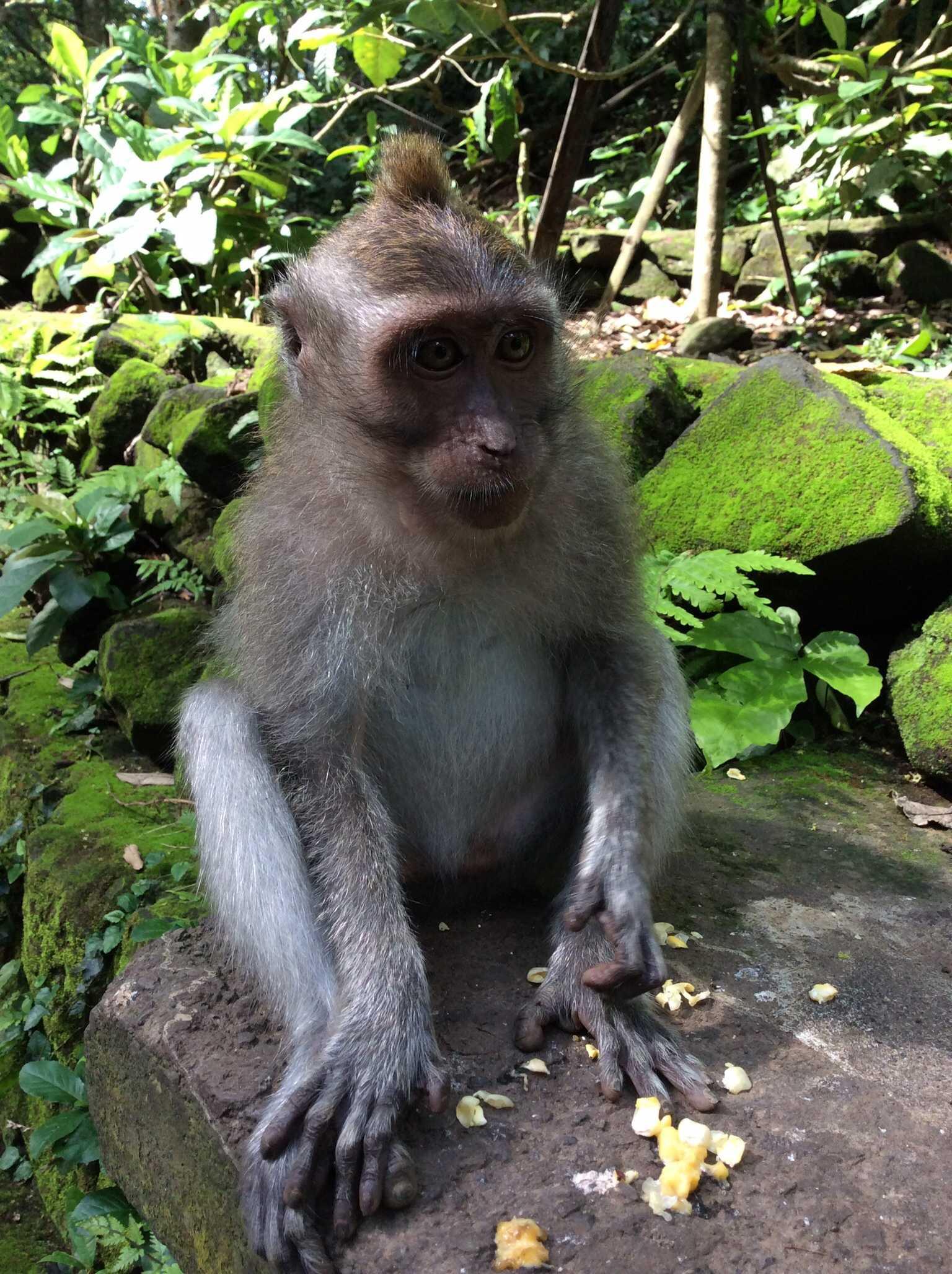 猿の泥棒さん☆_d0339884_17451986.jpg