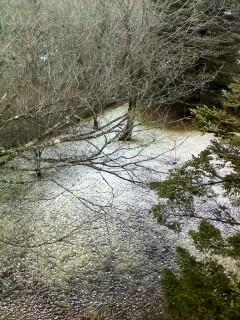 山中湖の初雪☆_d0339884_17524096.jpg