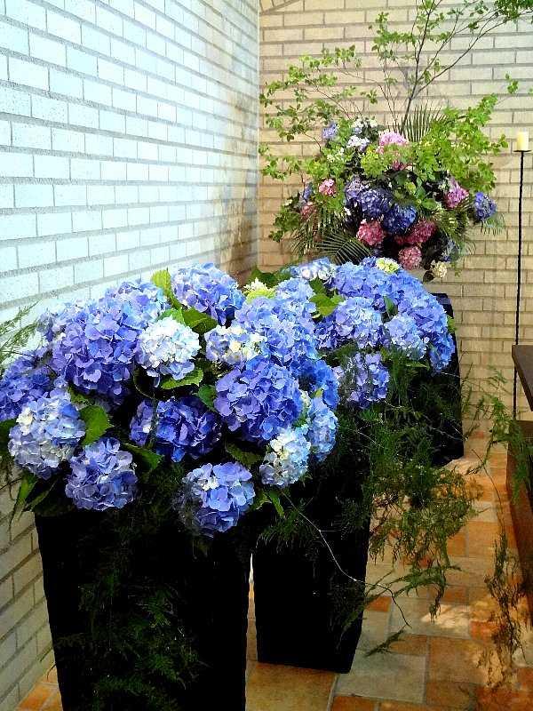 紫陽花と雨の関係☆_d0339884_17554486.jpg