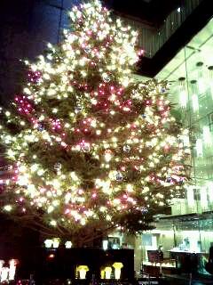 ミキモトのクリスマスツリー☆_d0339884_17565214.jpg