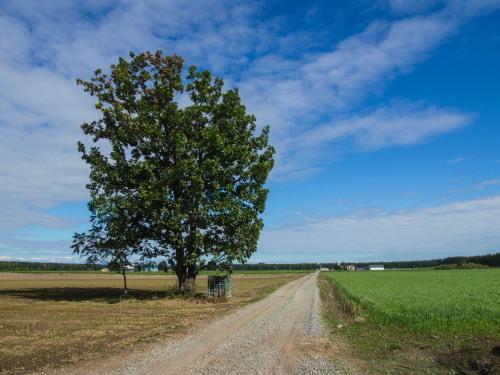 色づきはじめた畑の防風林~村道東5線の砂利道より~_f0276498_23135551.jpg