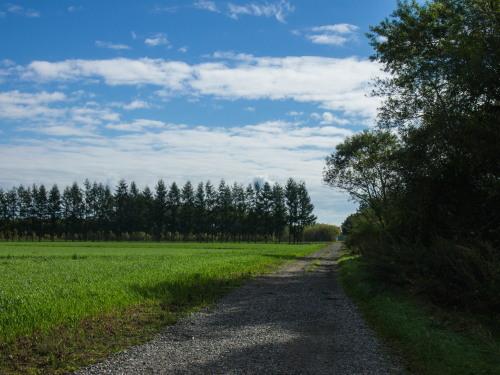 色づきはじめた畑の防風林~村道東5線の砂利道より~_f0276498_23154360.jpg