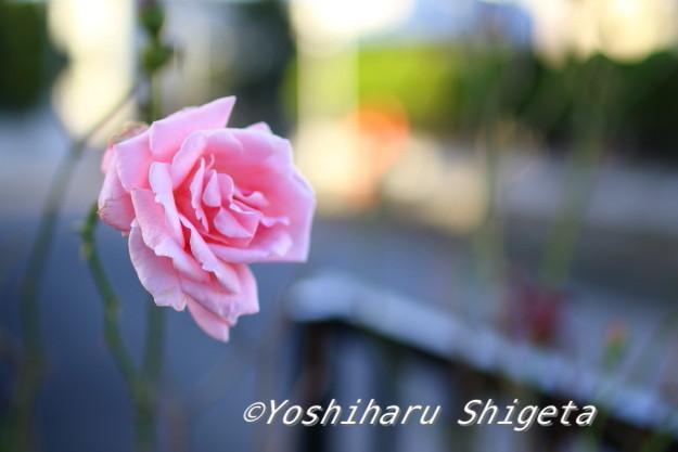 〜おはよう〜_c0152400_06412038.jpg