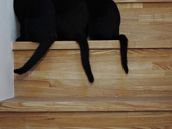 子猫のその後_d0168406_935589.jpg
