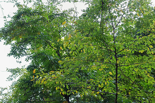 1mほどの蜘蛛の巣が! そして、少しずつ葉の色が変わり始めた。_b0194208_22143670.jpg