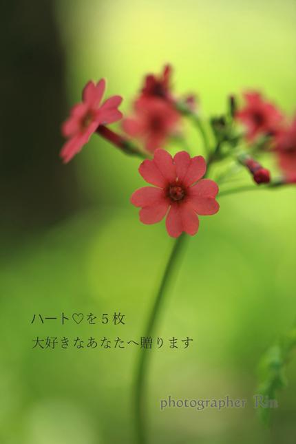 f0357923_11543556.jpg