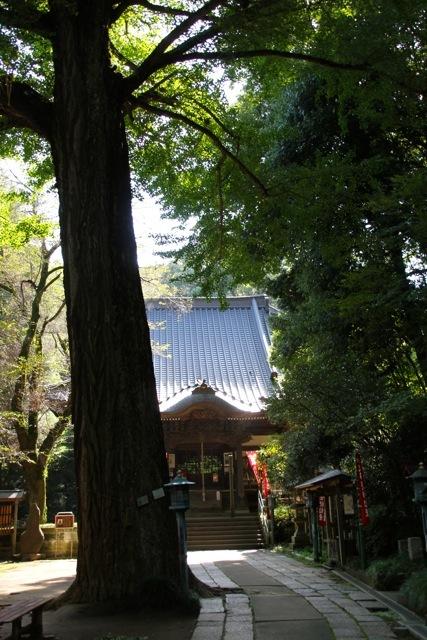 【薬師池公園】【七国山・そば畑】_f0348831_07114015.jpg