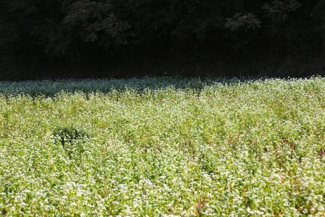 【薬師池公園】【七国山・そば畑】_f0348831_07213227.jpg