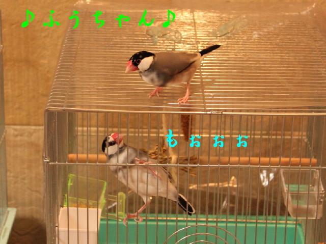 c0365734_22501696.jpg