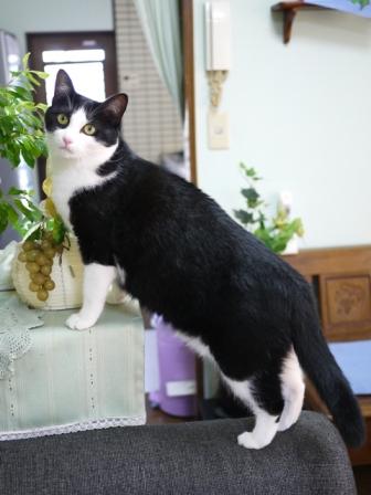 猫のお留守番 ハナちゃん編。_a0143140_22324345.jpg