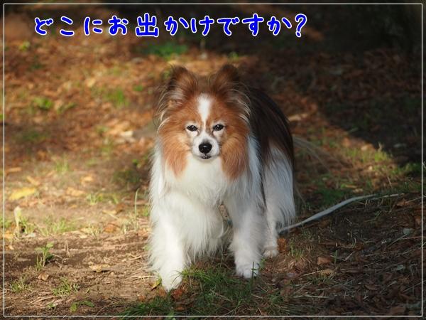 d0013149_22332013.jpg