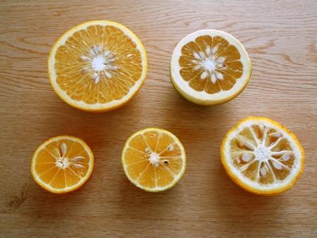 2015-11-26 : Thu  柑橘たっぷりポン酢作り♪_d0298850_22511771.jpg