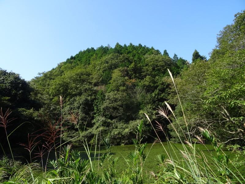 アサギマダラが またまたやって来た in 孝子の森     by     (TATE-misaki)_c0108460_20222029.jpg