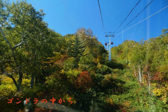 国際スキー所の紅葉_d0162994_17382740.jpg