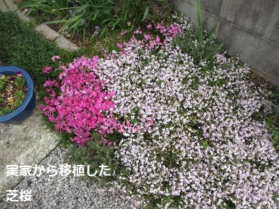 花とあんひま_f0068501_22123493.jpg