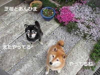 花とあんひま_f0068501_22174216.jpg