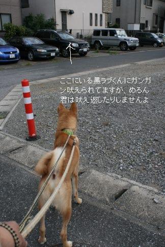 めろん君のお散歩_f0242002_1313332.jpg