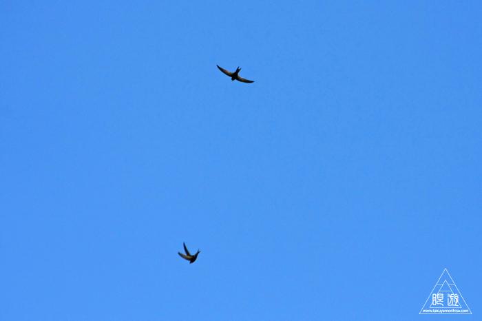 464 Strasbourg ~ストラスブールの野鳥~_c0211532_1432156.jpg