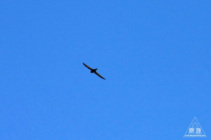 464 Strasbourg ~ストラスブールの野鳥~_c0211532_14332715.jpg