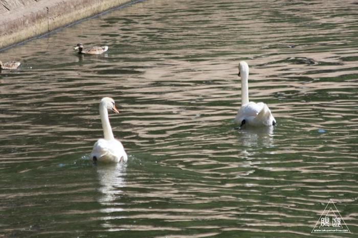 464 Strasbourg ~ストラスブールの野鳥~_c0211532_14413553.jpg