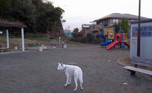 Vol.933 太尾町第三公園 : 小太郎の白っぽい世界