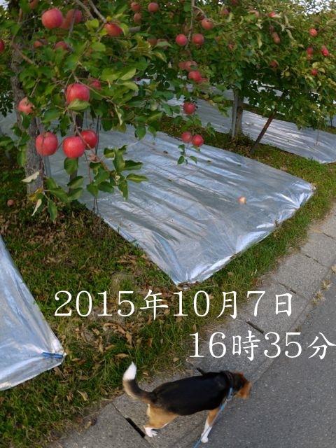 c0190940_20112563.jpg