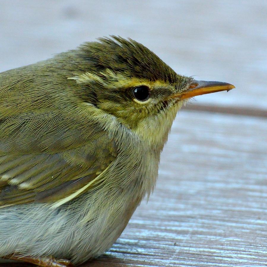 街中の野鳥(通勤撮影)_d0148541_22483466.jpg