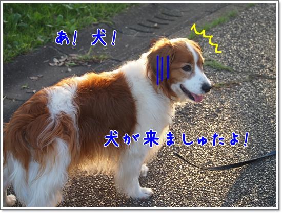 d0013149_041473.jpg