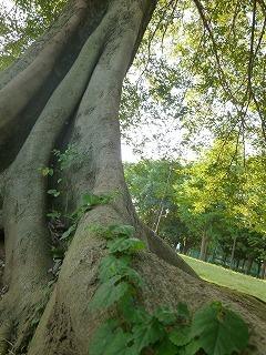 autumn  park  早起きの恩恵~♪_a0165160_07462342.jpg
