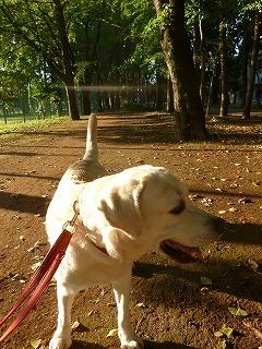autumn  park  早起きの恩恵~♪_a0165160_07481802.jpg