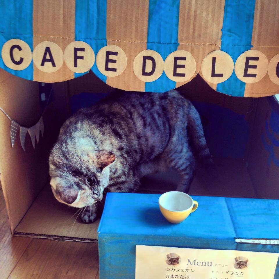 準備中@cafe de LEO_b0195783_9491666.jpg