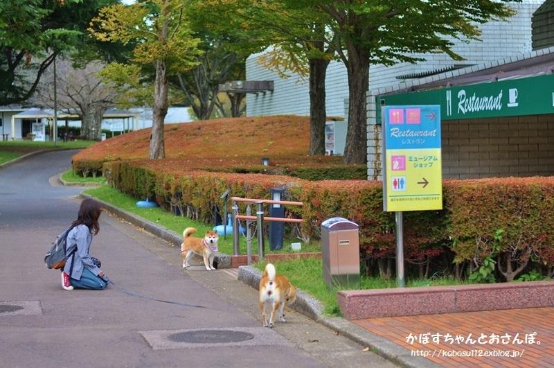 柴犬って_a0126590_04071796.jpg