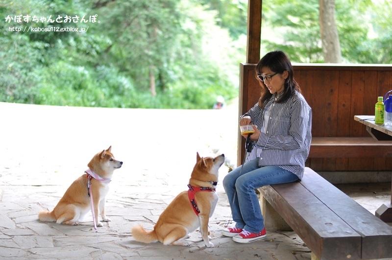柴犬って_a0126590_04091986.jpg