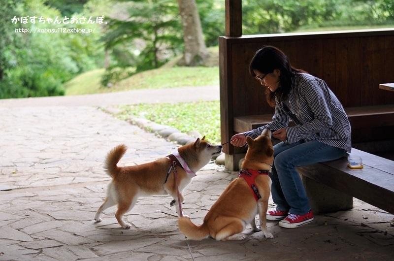 柴犬って_a0126590_04093139.jpg