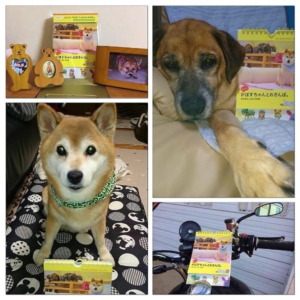 柴犬って_a0126590_04102169.jpg