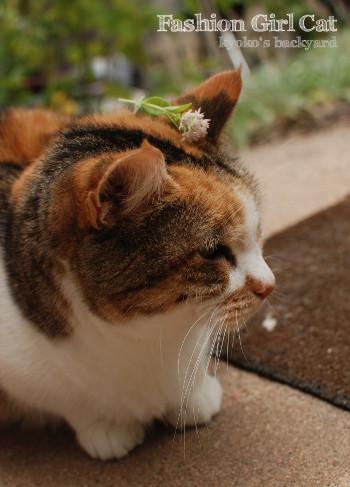 「豆芽花」に触発?されたオシャレ猫_b0253205_02202432.jpg