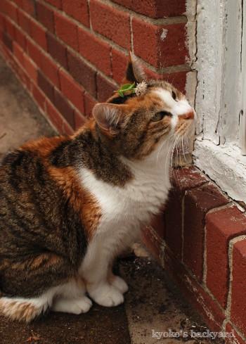 「豆芽花」に触発?されたオシャレ猫_b0253205_02214307.jpg