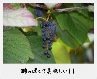 c0259934_14135272.jpg