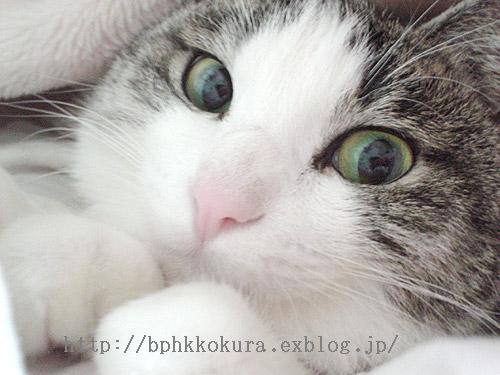 水曜どうでしょう?ですやん!_f0056935_183223.jpg