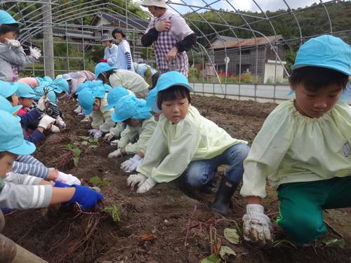 ゆり組さん さつま芋掘りに行ってきました!_d0166047_11325573.jpg