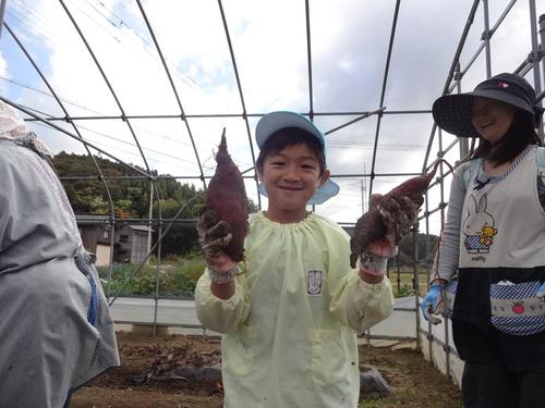 ゆり組さん さつま芋掘りに行ってきました!_d0166047_1138856.jpg